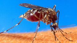Pernambuco decreta estado de emergência devido ao Aedes