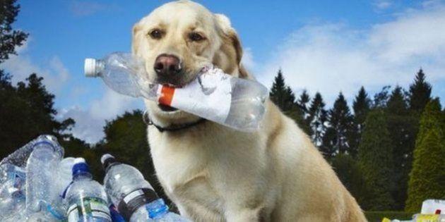A reciclagem de garrafas PET deixa estes cachorrinhos felizes da