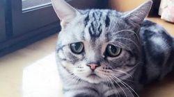O que entristece Luhu, o gato mais chateado da