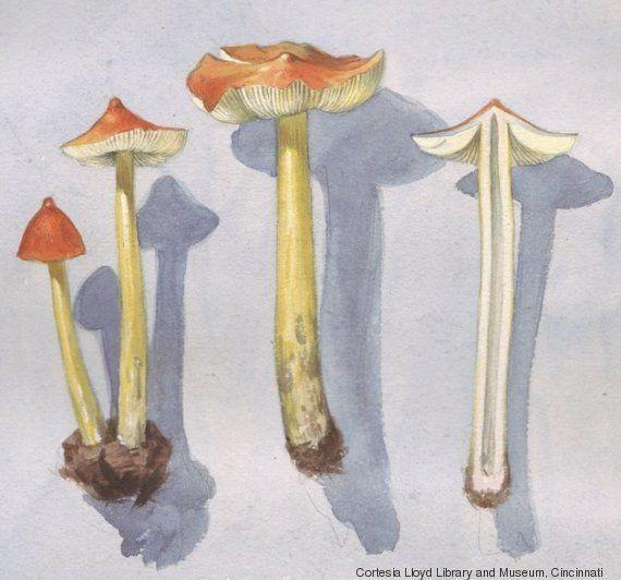 Cogumelos mágicos? Nem tanto. Mas a ciência diz que eles têm o poder de fazer