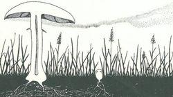 Cogumelos mágicos? Nem tanto. Mas a ciência diz que eles fazem