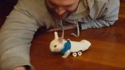 ASSISTA: Um pé de meia e um mini-skate deixaram este coelhinho MUITO