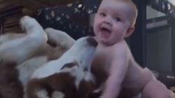 ASSISTA: Bebezinho e 'catioro' interagem do jeito mais FOFO possível