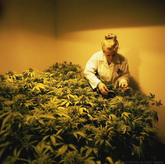 Estas 6 mulheres estão fazendo a diferença na legalização da maconha nos