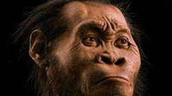 Cientistas dizem ter encontrado nova espécie do gênero humano na África do