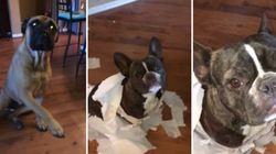 ASSISTA: Cadela dedo duro entrega quem espalhou papel higiênico pela