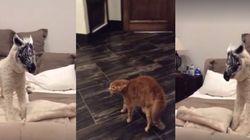ASSISTA: Cachorro usando máscara de zebra assusta