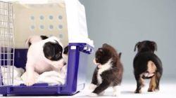 Vídeo mostra filhotes de cachorro e gato se encontrando pela primeira