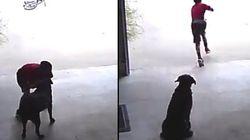 Garotinho é flagrado 'invadindo' casa vizinha para abraçar e brincar com uma