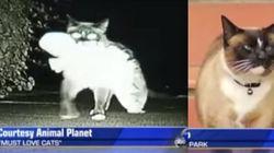 Conheça Dusty, o gato que roubou mais de 600 objetos dos