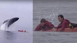 ASSISTA: Baleia faz aparição surpreendente e vira caiaque de