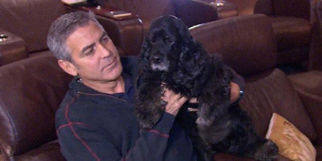 Como o cão de George Clooney saiu da rua para ir morar em uma linda vila na