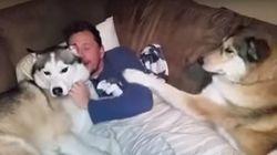 ASSISTA: Ciumenta, cadela não aceita que dono faça carinho em outro