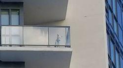 Vizinhos salvam cãozinho que congelava em varanda de