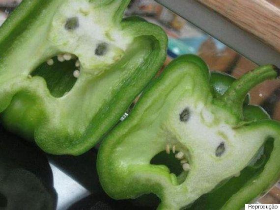 Planta sente dor? Vegetais não têm sistema nervoso