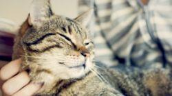 Como meu gato me ajudou a superar o câncer de