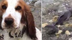 ASSISTA: Cachorrinha se desespera e consegue salvar vida de filhote de