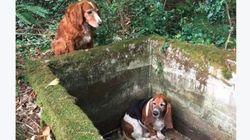 Esta cachorrinha ficou uma semana protegendo a amiga até elas serem