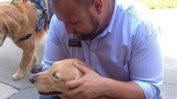 Estes cachorros foram confortar sobreviventes e familiares de vítimas do massacre de