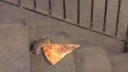 ASSISTA: SAI QUE É MEU! Rato sem vergonha carrega pizza pelo metrô de