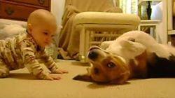 ASSISTA: Pais filmam encontro de bebê e cachorro pela primeira