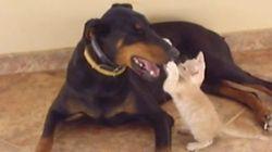 ASSISTA: Amizade entre cão e gato prova que o amor não tem tamanho nem