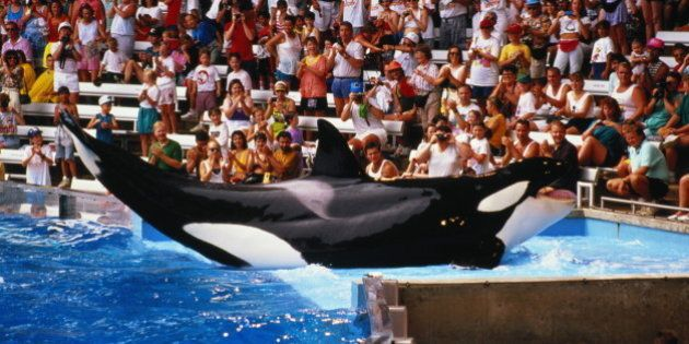 USA,Florida,Seaworld,Killer Whale lying in shallow