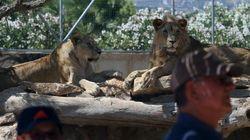 Crise coloca animais do zoológico de Atenas em
