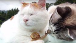 ASSISTA: Amigo ou comida? Gato fica encantado com