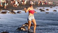 Turistas arruínam desova de tartarugas para tirar