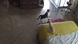 ASSISTA: Gato 'manda' cachorro que não para de latir 'calar a