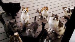 ASSISTA: Estes gatinhos famintos fazem barulho 'assustador' para pedir