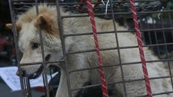 É certo ser contra o churrasco de cachorro na China, mas comer outros