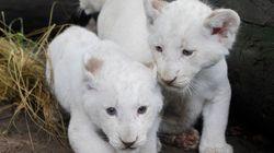 Vitória dos animais: Zoológico de Buenos Aires fecha as portas após 140