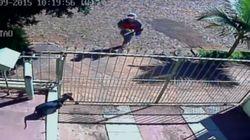 ASSISTA: Cachorro é espancado por funcionário de empresa de energia no