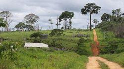 Projeto de deputados ameaça florestas e áreas protegidas no