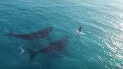 ASSISTA: Baleias curiosas 'cercam' praticante de stand up paddle na
