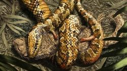 Esta cobra primitiva tinha quatro patas e vivia no