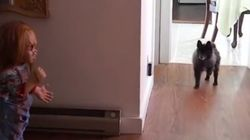 ASSISTA: Cachorro morre de medo de boneco do