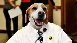 Vereador quer dar dia de folga no trabalho em caso de morte do animal de