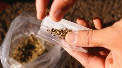 Itália vai discutir legalização do cultivo de