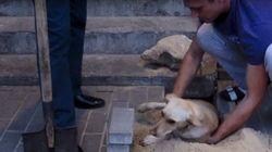 ASSISTA: Russos quebram calçada para salvar cadela grávida enterrada