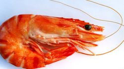 Cientistas criam camarão vegetariano feito de