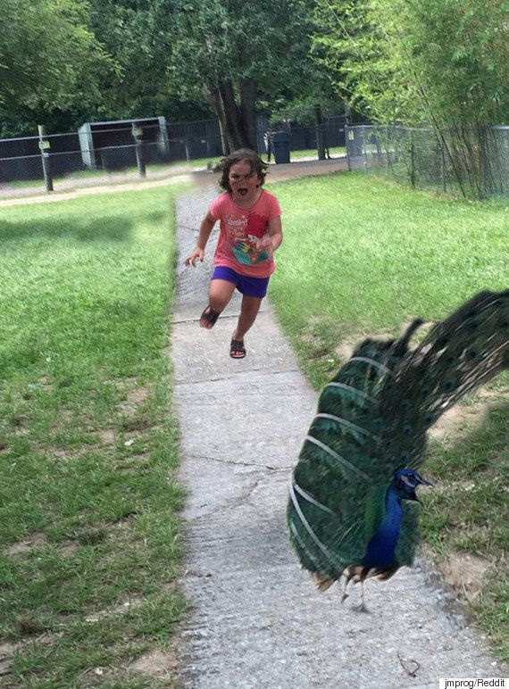 A foto da garotinha correndo de um pavão é o viral mais amado da