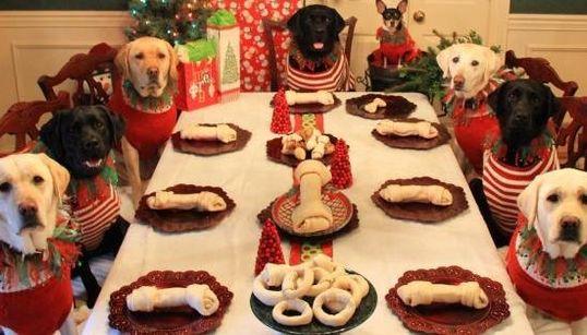 Estes cachorros são amigos e ganharam uma mesa só para eles na ceia de