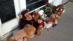 Justiça ouve dois acusados de ajudar na morte do leão