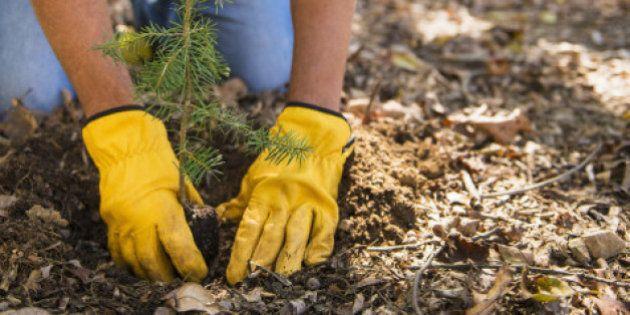 Universidade britânica planta uma árvore por estudante para ajudar o