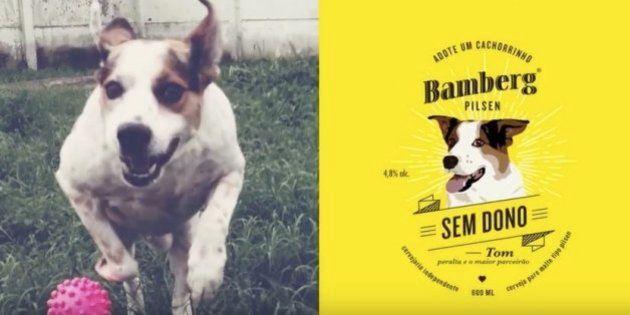 Cachorrinhos abandonados estrelam campanha de adoção em rótulo de cerveja e anúncio