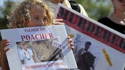 Caçador que matou leão Cecil vira homem mais criticado do