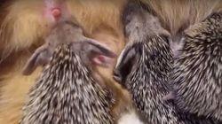 ASSISTA: Gata adota e amamenta filhotes de